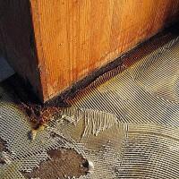 Cut-Back Contamination in Pressure-Sensitive Adhesive